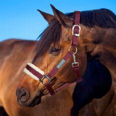 Cavezza Horses Winry con Pelo